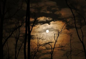 A night sky with the moon shining through orange clouds and black silhouetted tree branches