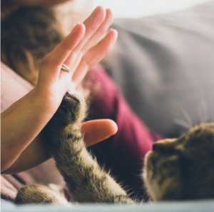 a close up on a hand high fiving the paw of a tabby kitten