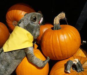 A soft toy lizard wearing a yellow  neckerchief sitting on a pile of pumpkins