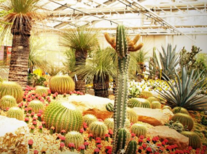 A group of cactuses, red flowers and a palm tree in a greenhouse
